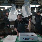 Fish seller at Tsukiji