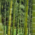 Close up of bamboo forest